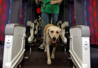 a complete guide to airline policy on emotional support animals Airlines That Allow Dogs In Cabin